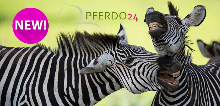 Zebra-Fliegenartikel-Daselfo