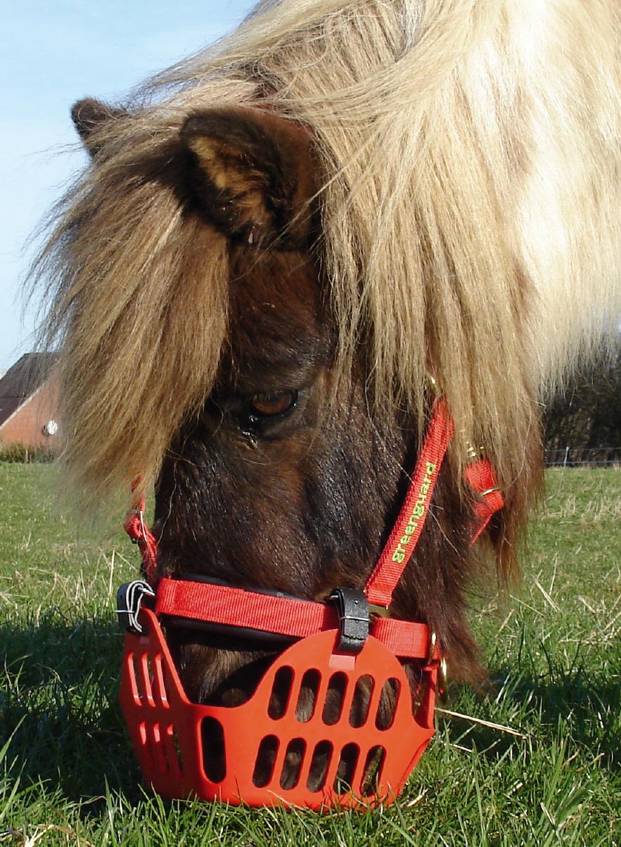 Freßschutz von Horse Guard Freßbremse Maulkorb