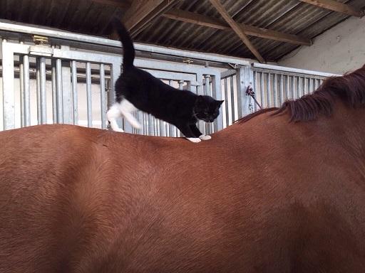 katzen und pferde  pferdo24