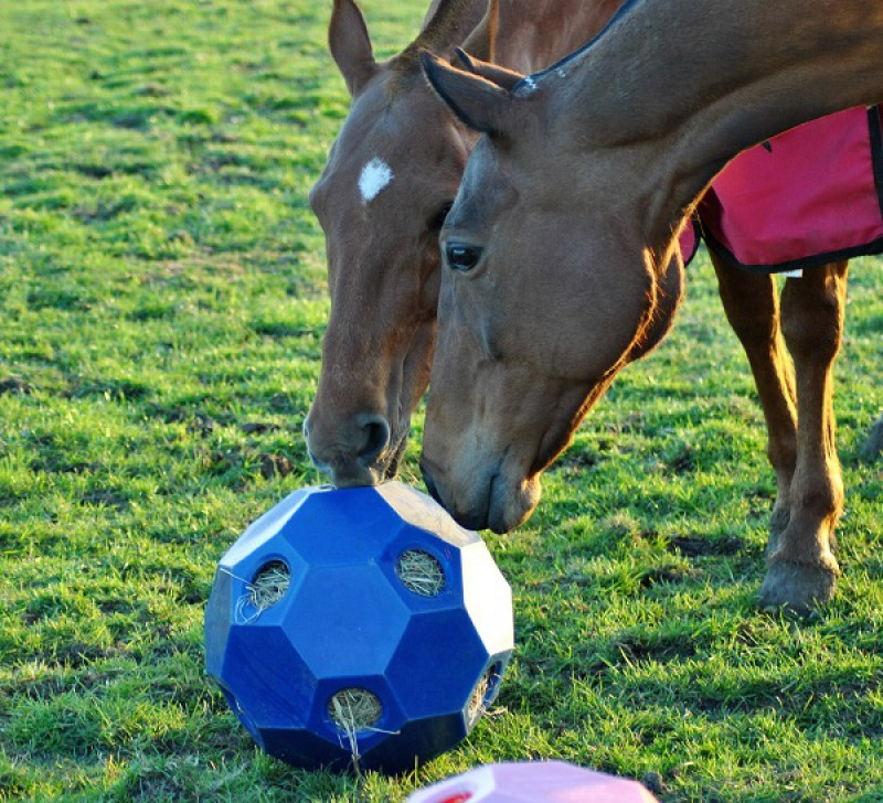 pferdo24 Happy Hay Play USG Fütterungsball Spielball Heuball langsam fressen TOP