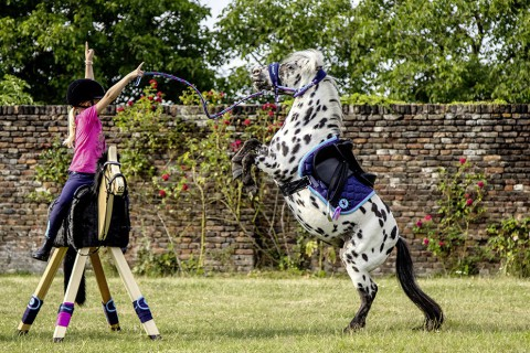 Schabracke Funny Horses dunkelblau/dunkelpink HKM