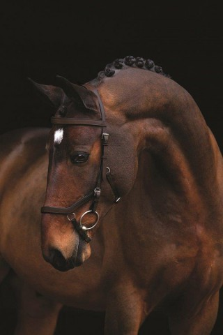 Rambo Micklem Competition Bridle braun HORSEWARE