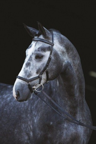 Rambo Micklem Competition Bridle schwarz HORSEWARE