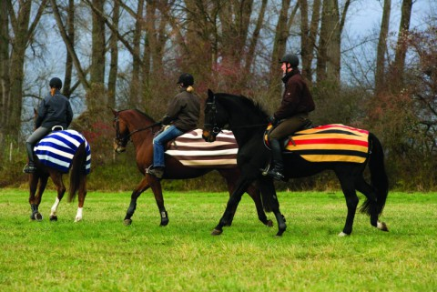 Ausreitdecke Rambo Newmarket Competition blau HORSEWARE