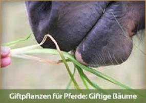 Wussten Sie, dass diese bekannten Bäume und Büsche giftig sind für Ihr Pferd? Kristallkraft klärt auf!