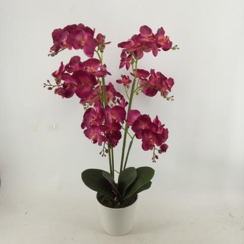Orchidee Phalaenopsis mit Topf ca.73cm